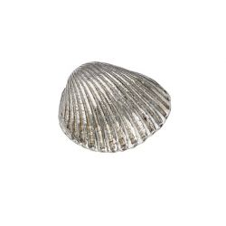 Cockle Shell Ornament (S)