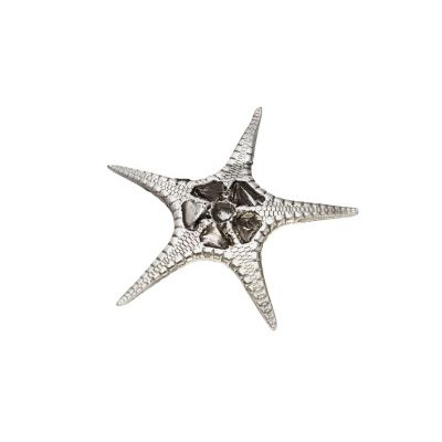 Fancy Starfish Shell Ornament (L)