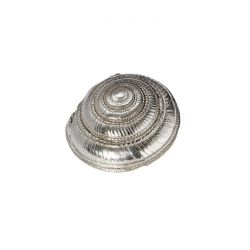 Flat Spiral Shell Ornament (L)